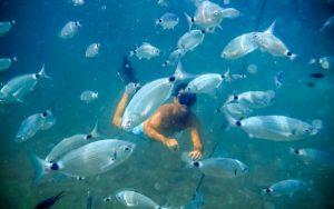 Peces-en-Menorca